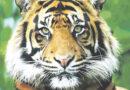 Conheça o Zoológico de Itatiba