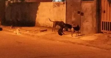 Cachorros soltos preocupam moradores