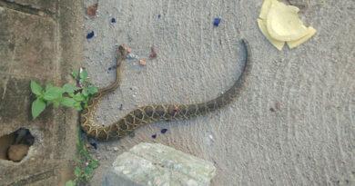 Cobra aparece ao lado de escola infantil