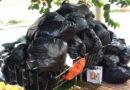 Coleta de lixo é suspensa em Jundiaí