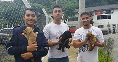 Filhotes de cachorros são resgatados de bueiro