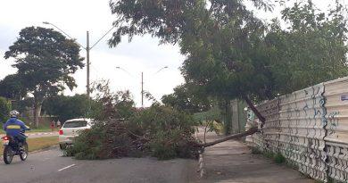 Ventos fortes derrubam árvore na Ferroviários