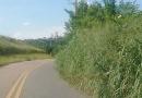 Leitor pede corte de mato em estrada