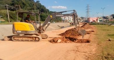 """Avenida Bertioga será revitalizada com Palmeiras """"Jerivá"""" em Várzea"""