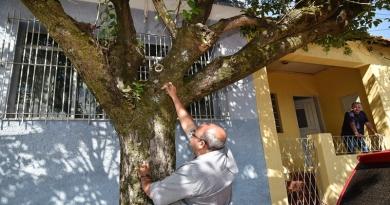 Vistoria preventiva avalia condição de árvores da cidade