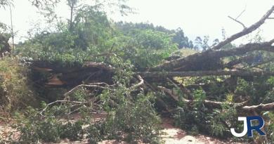 Jarinu teve 20 quedas de árvores e muitos estragos