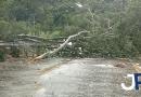 Avenida do Caxambu fica bloqueada com queda de árvore