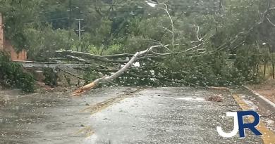 Vendaval deixou pelo menos 10 árvores caídas