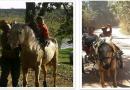 Rapaz procura égua furtada em Campo Limpo Paulista