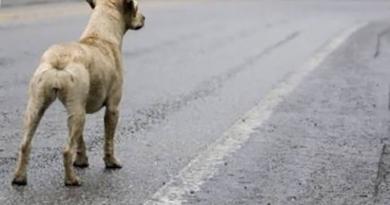 ONG pode suspender atendimento a animais abandonados