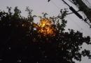 Árvore continua escondendo luminária