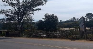 Corte de árvores na Roseira gera reclamação