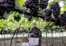 Semana do Agricultor começa segunda com várias atividades