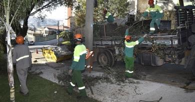 Serviços Públicos intensifica poda de árvores em avenidas de Jundiaí