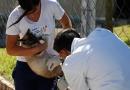 Itupeva imuniza mais de 200 animais no 1º dia de vacinação antirrábica