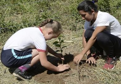 CCR AutoBAn e Fundação Cintra Gordinho plantam mudas frutíferas
