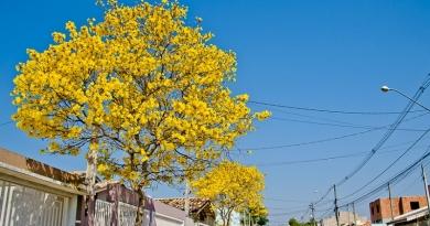 No Dia da Árvore, Itupeva realiza ações no município