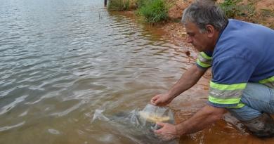 Para controle da vegetação, 500 peixes são soltos na represa