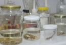 Após casos, Zoonoses orienta sobre prevenção a escorpiões