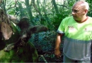 Bicho-preguiça é devolvido à natureza