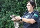 Prefeitura de Vinhedo e ONG Mata Ciliar reintegram animais à natureza
