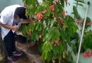 Mutirão da dengue continua neste sábado (23) em Itupeva
