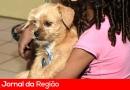 Prefeitura faz castração de cães no Vetor Oeste