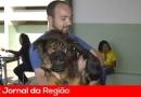 Prefeitura castra 200 animais no Ivoturucaia