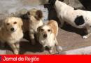 Cachorrinhas abandonadas em rodovia
