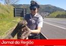 Bicho-Preguiça invade rodovia