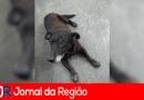 Cachorra resgatada em avenida