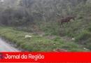 Cavalo solto oferece perigo aos motoristas