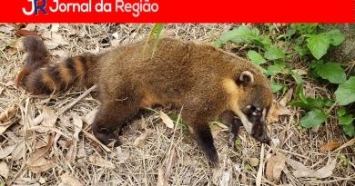 Animais seguem sendo mortos em avenida