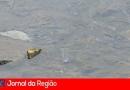 Rio Jundiaí volta a ganhar vida