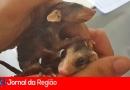 Associação Mata Ciliar suspende recebimento de animais
