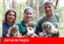 Três tigres siberianos nascem no Zoo de Itatiba