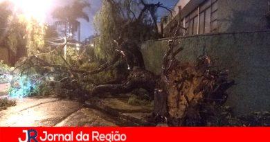 Jundiaí registra várias quedas de árvores